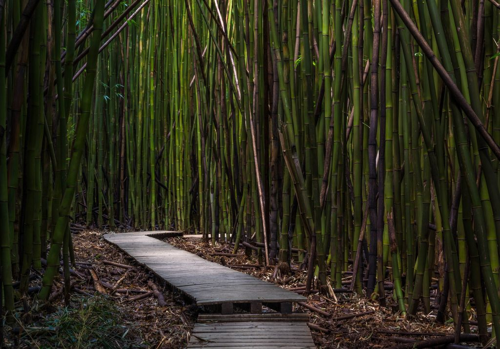 path through bamboo