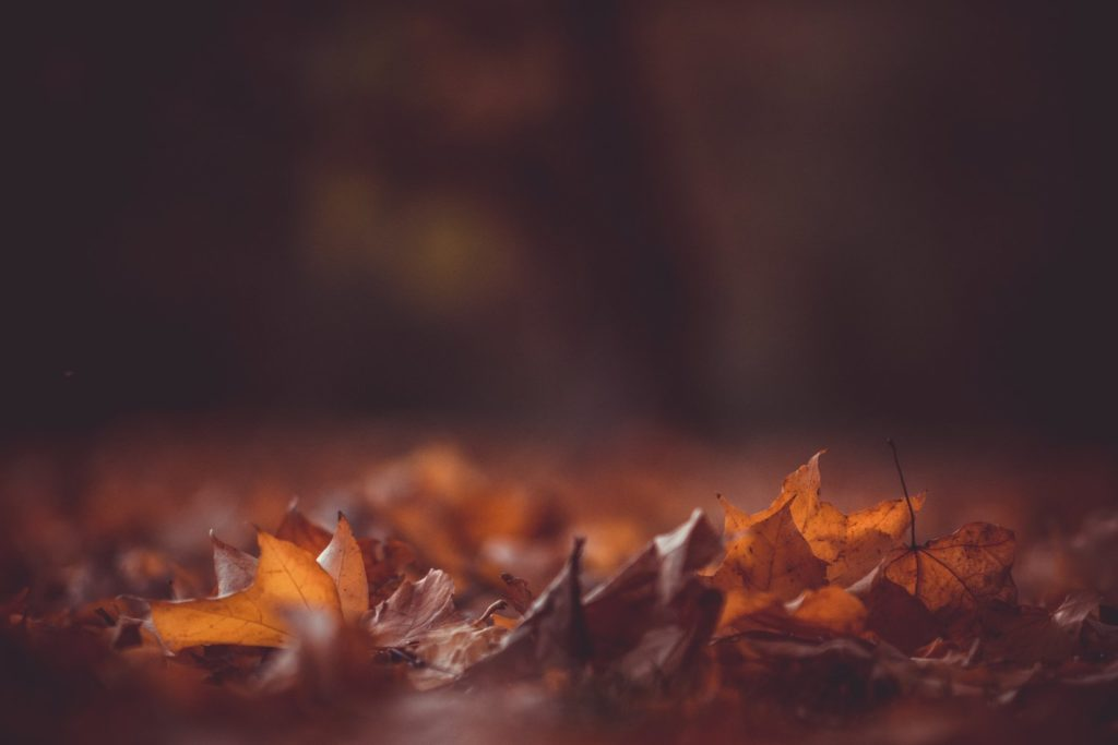 4 Ways to be Missional this Thanksgiving